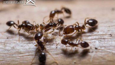 صورة طرق فعالة للتخلص من النمل