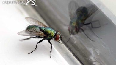 Photo of طرق التخلص من الحشرات المنزلية