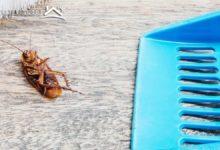 Photo of 11 طريقة للتخلص من الصراصير