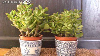 Photo of علاقة النباتات داخل المنزل بجذب الطاقة الإيجابية