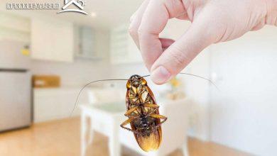 صورة أفكار بسيطة للقضاء على الصراصير في المطبخ