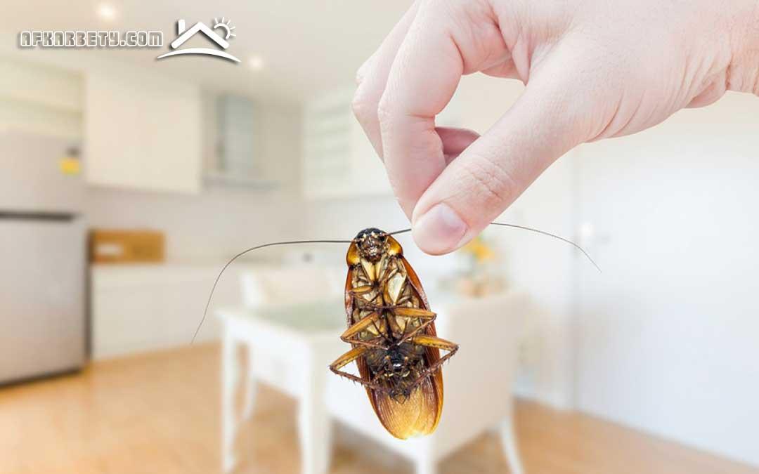 القضاء على الصراصير في المطبخ